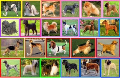 Representatives from each of the 23 clades of breeds. Breeds and clades