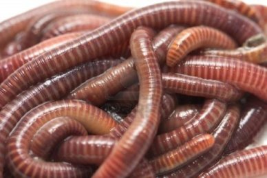 worms are destroying the earth