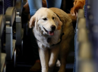 Delta Air Lines says for safety reasons it will require owners to provide more information before their animal can fly in the passenger cabin, including an assurance that it's trained to behave itself