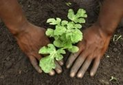 economy brings out green thumbs
