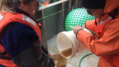NOAA researchers pour a sample of sea water containing a brownish toxic algae into a jar aboard a research vessel off the Washington Coast